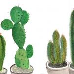 Isobel Brigham - Cacti 2012
