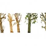 Isobel Brigham - Five Trees 2005
