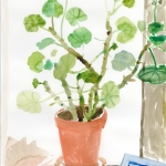 Geranium in the Studio with a Book and Shell 2008 Watercolour 15x11 ins